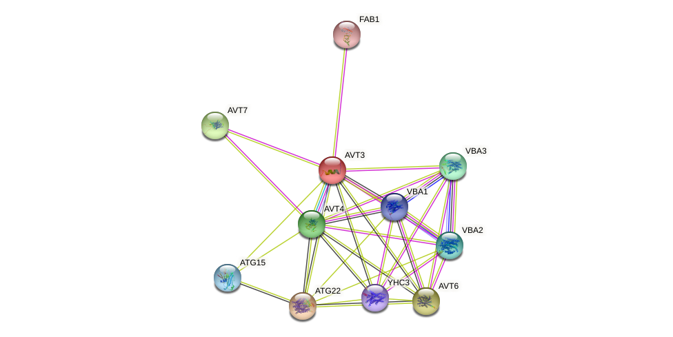 AVT3 protein (Saccharomyces cerevisiae) - STRING interaction network