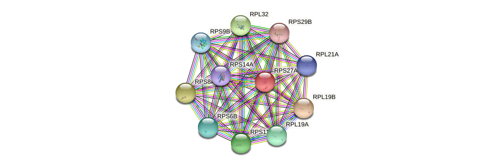 RPS27A protein (Saccharomyces cerevisiae) - STRING interaction network