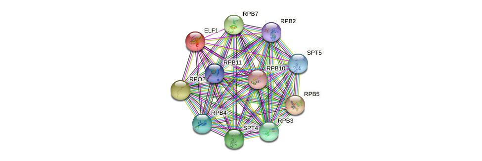 ELF1 protein (Saccharomyces cerevisiae) - STRING interaction network