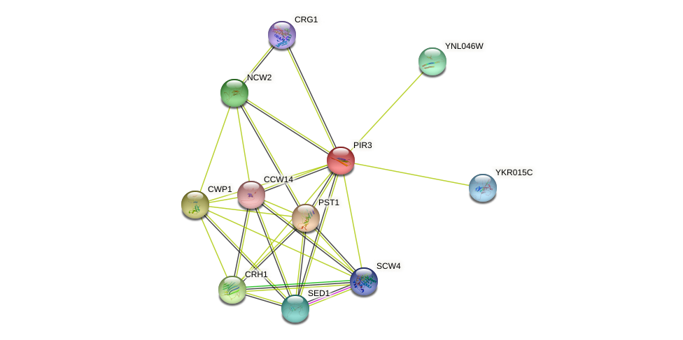 PIR3 protein (Saccharomyces cerevisiae) - STRING interaction network