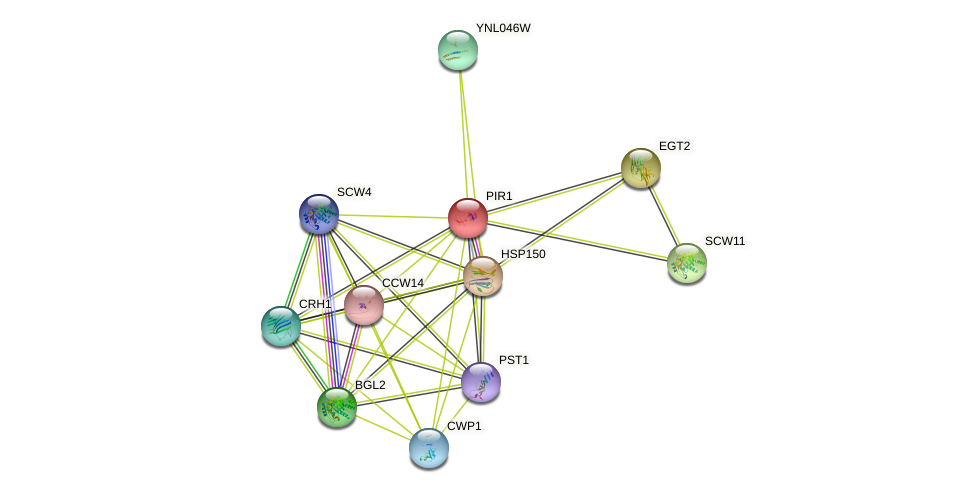 PIR1 protein (Saccharomyces cerevisiae) - STRING interaction network
