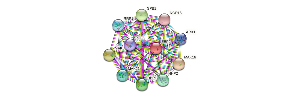 EBP2 protein (Saccharomyces cerevisiae) - STRING interaction network