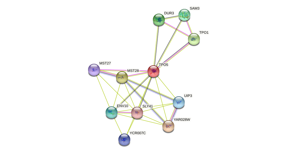 TPO5 protein (Saccharomyces cerevisiae) - STRING interaction network