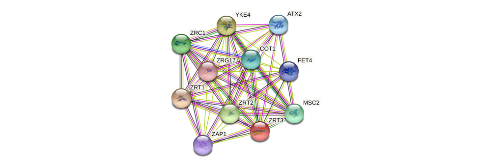 ZRT3 protein (Saccharomyces cerevisiae) - STRING interaction network