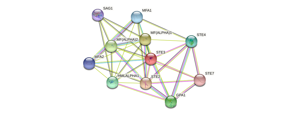 STE3 protein (Saccharomyces cerevisiae) - STRING interaction network