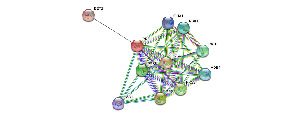 PRS1 protein (Saccharomyces cerevisiae) - STRING interaction network