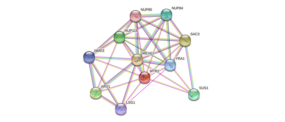 MTR2 protein (Saccharomyces cerevisiae) - STRING interaction network