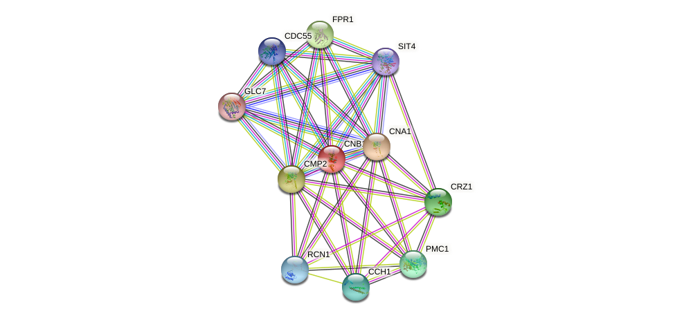 CNB1 protein (Saccharomyces cerevisiae) - STRING interaction network