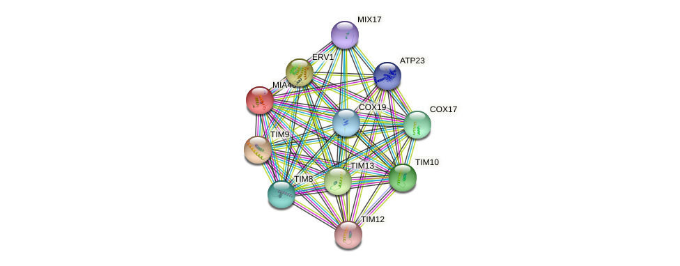 MIA40 protein (Saccharomyces cerevisiae) - STRING interaction network