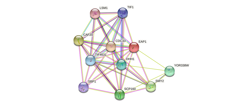 EAP1 protein (Saccharomyces cerevisiae) - STRING interaction network