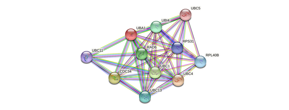 UBA1 protein (Saccharomyces cerevisiae) - STRING interaction network