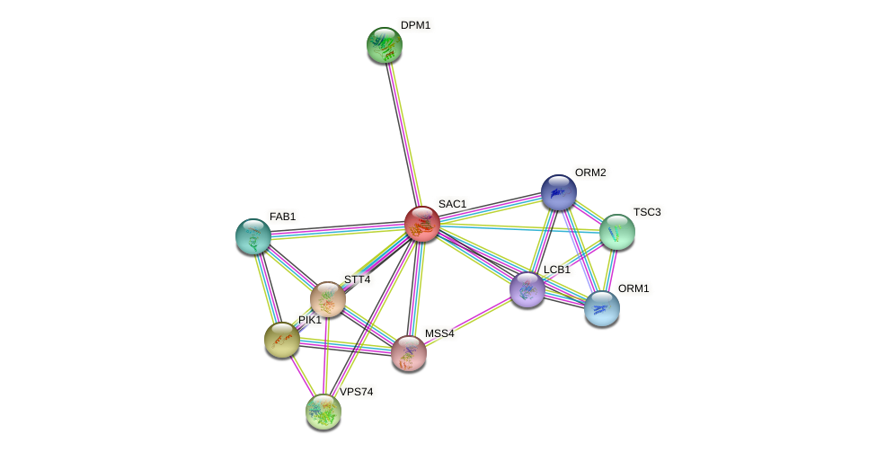 SAC1 protein (Saccharomyces cerevisiae) - STRING interaction network