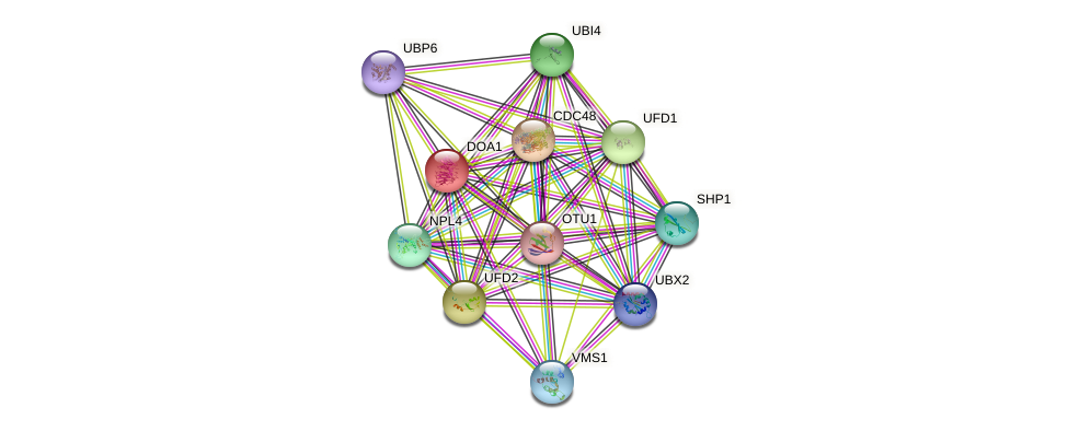 DOA1 protein (Saccharomyces cerevisiae) - STRING interaction network