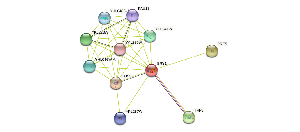 SRY1 protein (Saccharomyces cerevisiae) - STRING interaction network