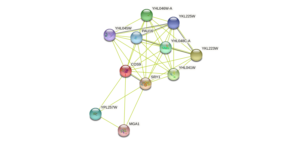 COS9 protein (Saccharomyces cerevisiae) - STRING interaction network
