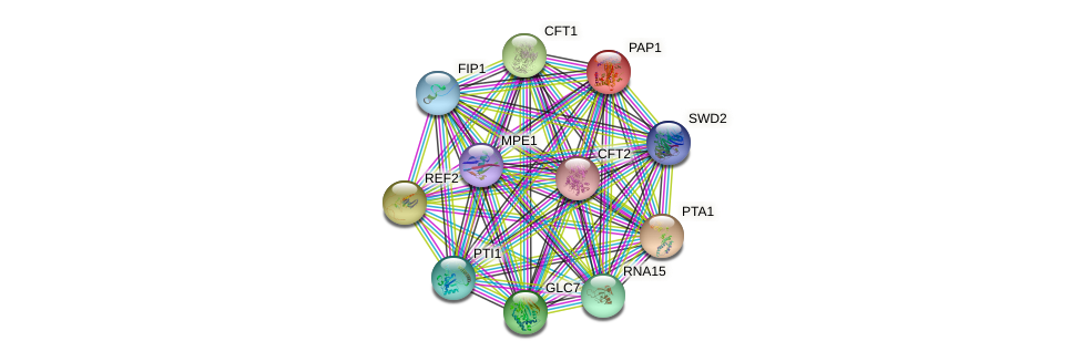 PAP1 protein (Saccharomyces cerevisiae) - STRING interaction network