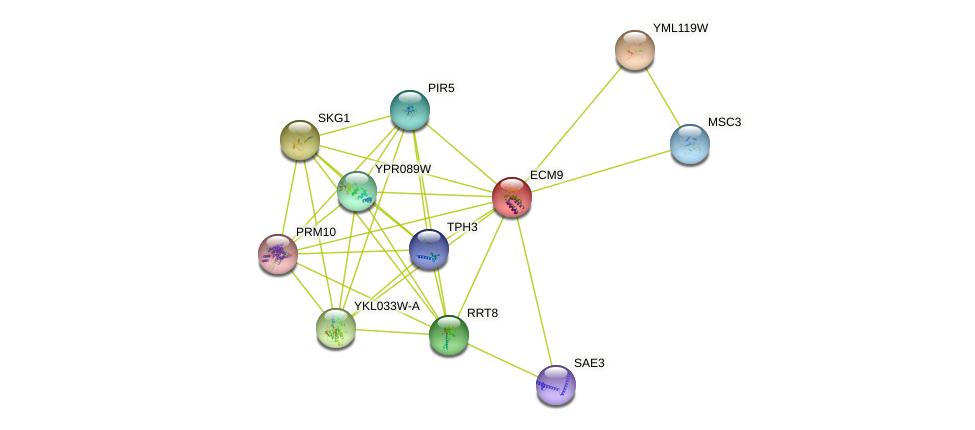 ECM9 protein (Saccharomyces cerevisiae) - STRING interaction network
