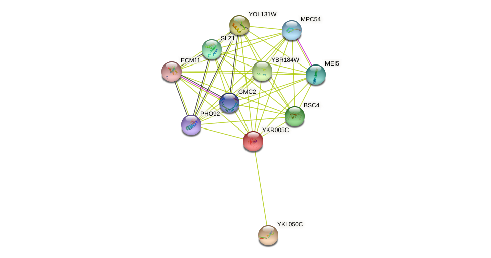 YKR005C protein (Saccharomyces cerevisiae) - STRING interaction network