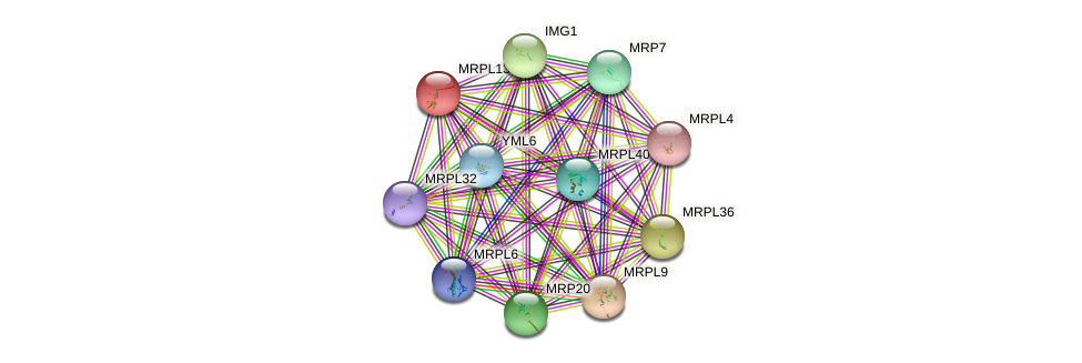 MRPL13 protein (Saccharomyces cerevisiae) - STRING interaction network
