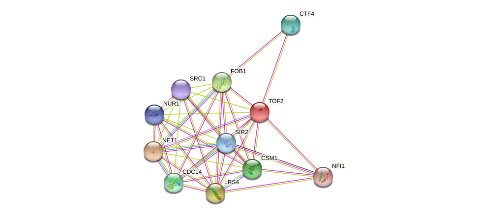 TOF2 protein (Saccharomyces cerevisiae) - STRING interaction network