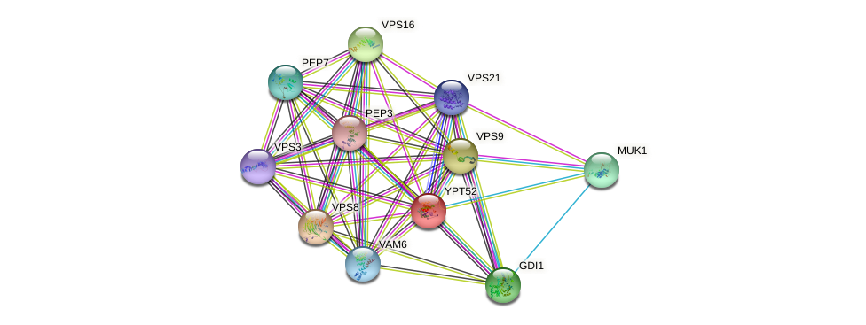 YPT52 protein (Saccharomyces cerevisiae) - STRING interaction network