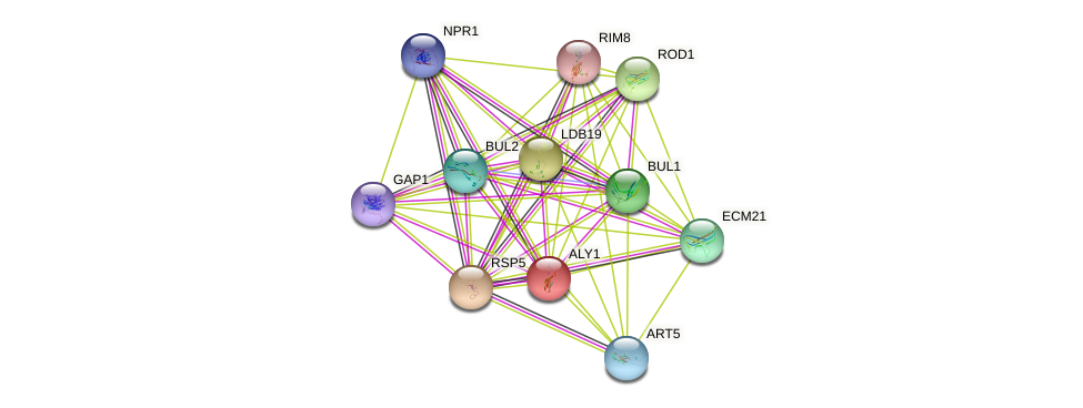 ALY1 protein (Saccharomyces cerevisiae) - STRING interaction network