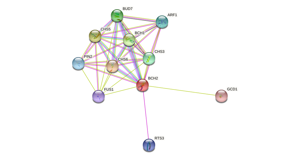 BCH2 protein (Saccharomyces cerevisiae) - STRING interaction network