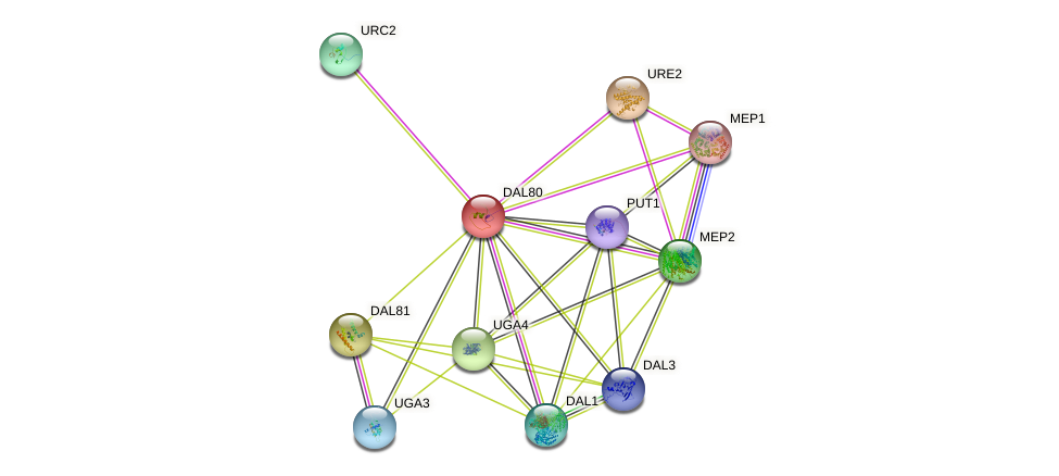 DAL80 protein (Saccharomyces cerevisiae) - STRING interaction network
