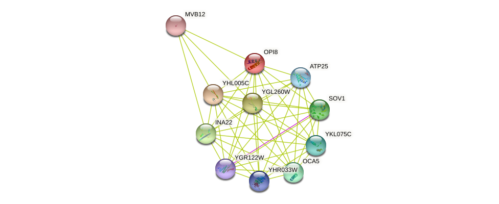 OPI8 protein (Saccharomyces cerevisiae) - STRING interaction network