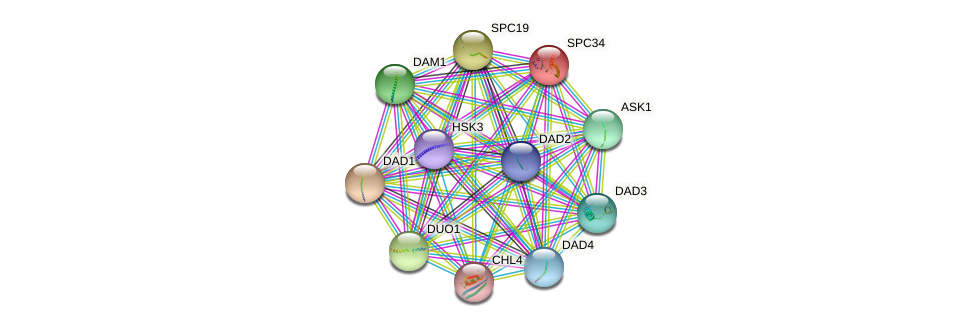 SPC34 protein (Saccharomyces cerevisiae) - STRING interaction network