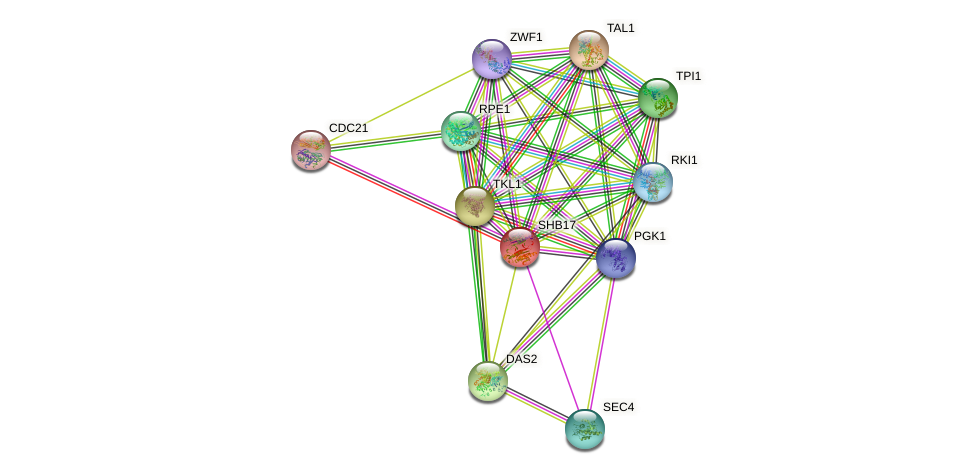 SHB17 protein (Saccharomyces cerevisiae) - STRING interaction network