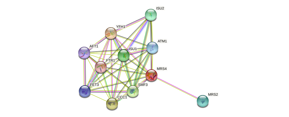 MRS4 protein (Saccharomyces cerevisiae) - STRING interaction network