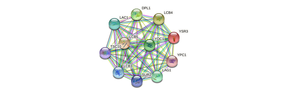YSR3 protein (Saccharomyces cerevisiae) - STRING interaction network