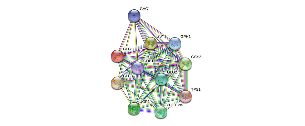 GLG1 protein (Saccharomyces cerevisiae) - STRING interaction network