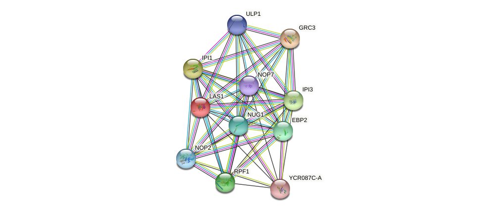 LAS1 protein (Saccharomyces cerevisiae) - STRING interaction network