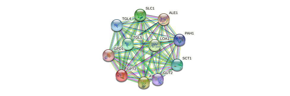 GPT2 protein (Saccharomyces cerevisiae) - STRING interaction network