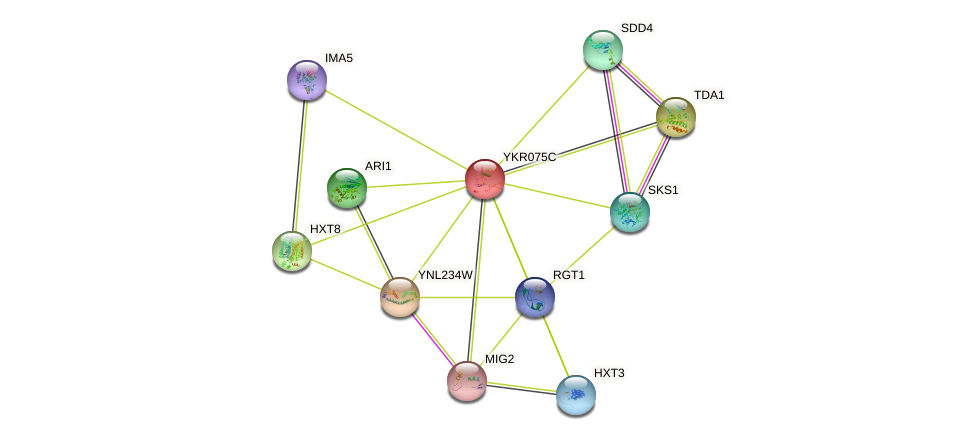 YKR075C protein (Saccharomyces cerevisiae) - STRING interaction network
