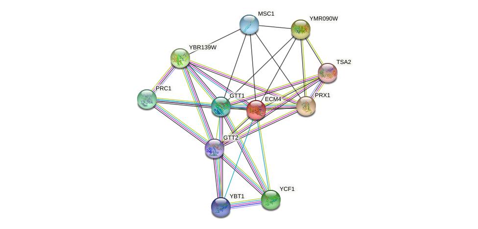 ECM4 protein (Saccharomyces cerevisiae) - STRING interaction network
