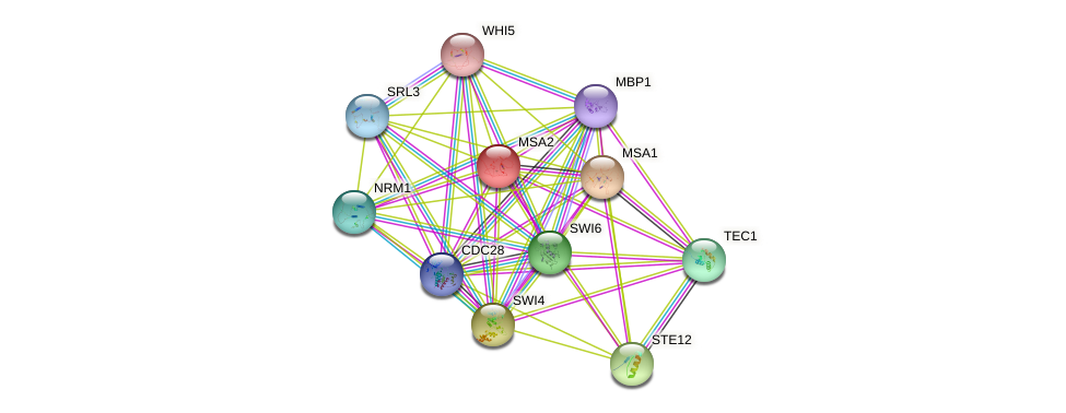 MSA2 protein (Saccharomyces cerevisiae) - STRING interaction network