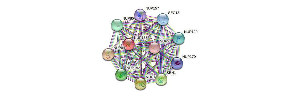 NUP133 protein (Saccharomyces cerevisiae) - STRING interaction network