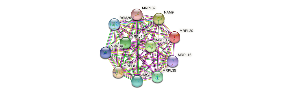 MRPL20 protein (Saccharomyces cerevisiae) - STRING interaction network