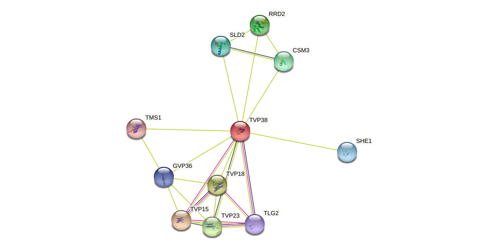 TVP38 protein (Saccharomyces cerevisiae) - STRING interaction network