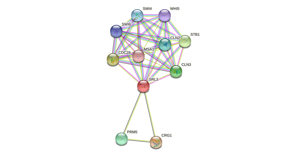 SRL3 protein (Saccharomyces cerevisiae) - STRING interaction network