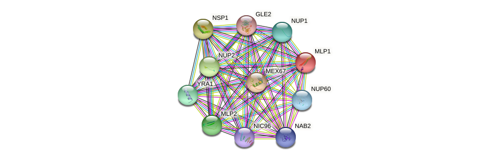 MLP1 protein (Saccharomyces cerevisiae) - STRING interaction network