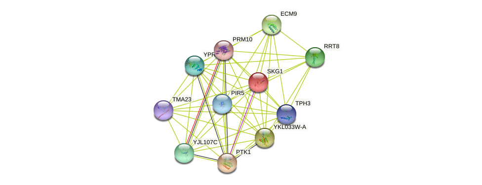 SKG1 protein (Saccharomyces cerevisiae) - STRING interaction network