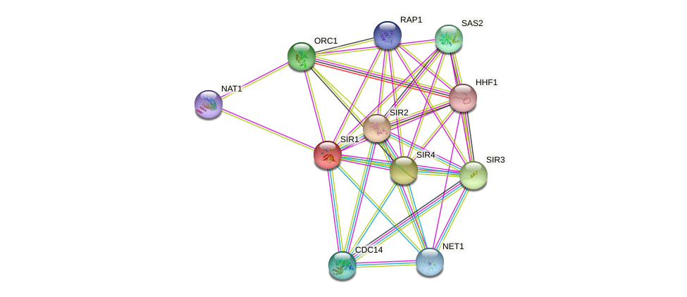 SIR1 protein (Saccharomyces cerevisiae) - STRING interaction network