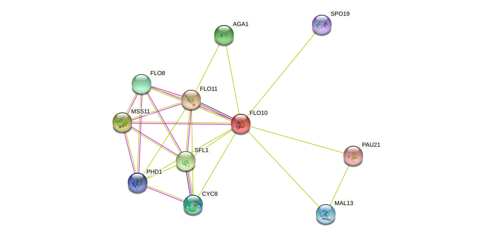 FLO10 protein (Saccharomyces cerevisiae) - STRING interaction network