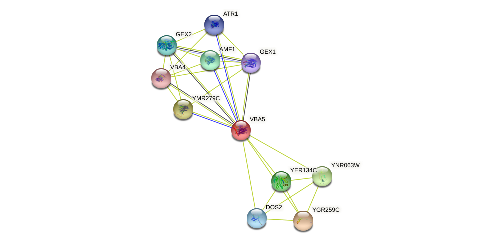 VBA5 protein (Saccharomyces cerevisiae) - STRING interaction network