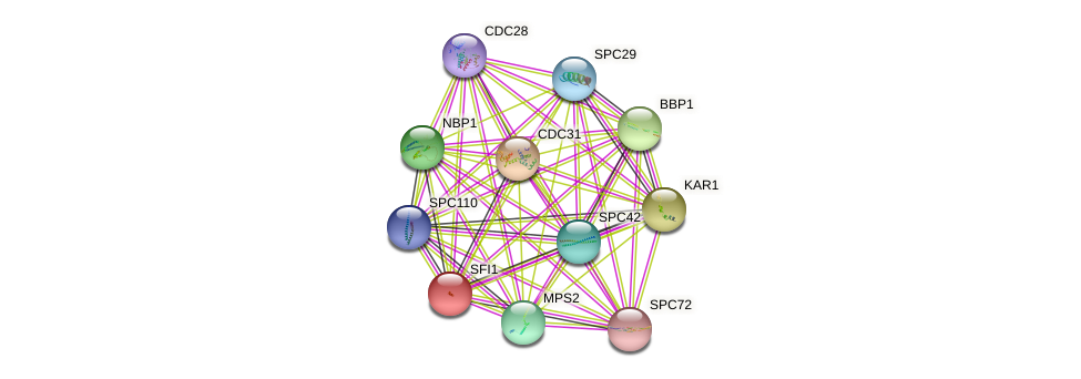 SFI1 protein (Saccharomyces cerevisiae) - STRING interaction network