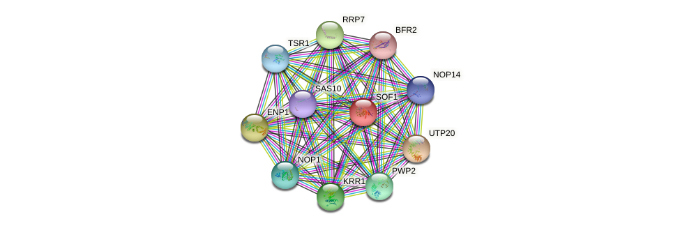 SOF1 protein (Saccharomyces cerevisiae) - STRING interaction network